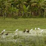 Flora y fauna de Ometepe, Nicaragua