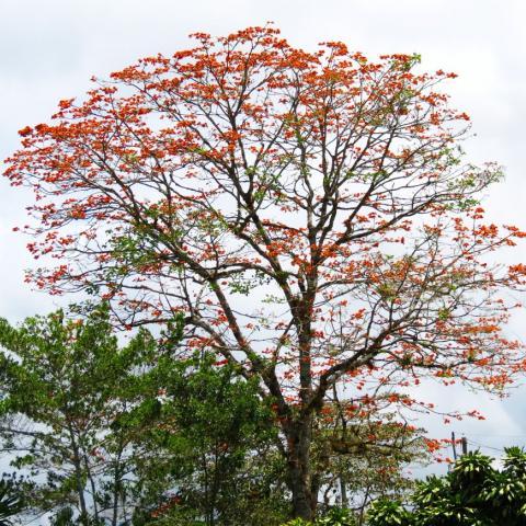 Malinche montero - Manteco